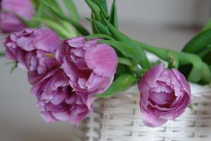 tulipany w koszu